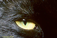 CT02-002z  Cat - eye close-up