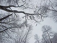 FOREST_LOCATION_90181