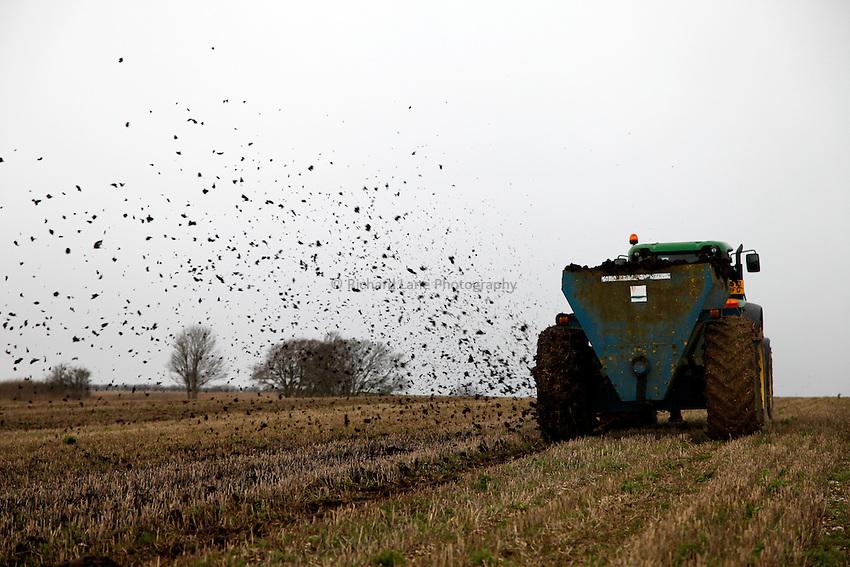 Photo: Richard Lane/Richard Lane Photography. Muck speading near Lower Woodford, Salisbury, Wiltshire. 06/12/2012.