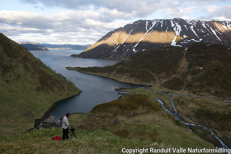 Mann med kamera i oppstigningen fra Bekkarfjorden på Seiland. ---- Man with camera overlooking Bekkarfjorden on Seiland.