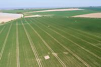 Sky lark plots in winter wheat - Norfolk, May