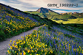 Tom Mackie, LANDSCAPES, LANDSCHAFTEN, PAISAJES, photos,+America, American, Colorado, Crested Butte, North America, Tom Mackie, USA, beautiful, dramatic outdoors, flower, flowers, fo+otpath, hill, hills, hillside, horizontal, horizontals, landscape, landscapes, larkspur, mountain, mountains, mules ear sunfl+ower, nobody, path, pathway, pathways, scenery, scenic, wildflower, wildflowers, yellow,America, American, Colorado, Crested+Butte, North America, Tom Mackie, USA, beautiful, dramatic outdoors, flower, flowers, footpath, hill, hills, hillside, horizo+,GBTM190222-1,#l#, EVERYDAY