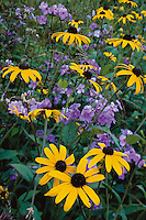 Summer wildflowers along the Blue Ridge Parkway, North Carolina