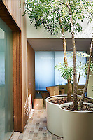 Trees in large round planters add colour and texture to an outdoor terrace space, which has an American redwood facade.