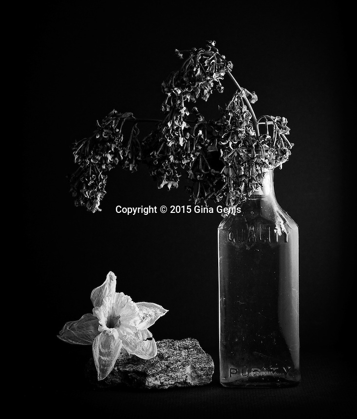 Still life with lilacs, withered daffodil, antique bottle, and rock
