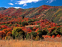 Covered Bridge Canyon near Spanish Fork in Utah is one of the truly great places in the world to capture the vivid colors of oak and maple in autumn