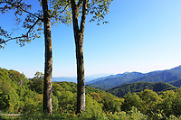Stock photo: Two trees standing in great smoky mountain national park of Tennessee overlooking beautiful peaks and landscape.