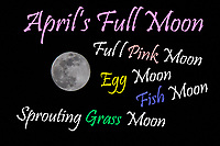 From the Old Farmer's Almanac web site:  April&rsquo;s Full Moon, the Full Pink Moon, heralds the appearance of the &ldquo;moss pink,&rdquo; or wild ground phlox&mdash;one of the first spring flowers. It is also known as the Sprouting Grass Moon, the Egg Moon, and the Fish Moon.<br /> <br /> These names were not invented by The Old Farmer&rsquo;s Almanac. They were used by early Colonial Americans&mdash;who learned the names from the local Native Americans; time was not recorded by using the months of the Julian or Gregorian calendar. Many tribes kept track of time by observing the seasons and lunar months, although there was much variability. The name itself usually described some activity that occurred during that time in their location.