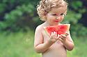 Watermelon Summer Mini's