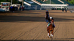 LOUISVILLE, KENTUCKY - APRIL 29: Out for a Spin, trained by Dallas Stewart, exercises in preparation for the Kentucky Oaks at Churchill Downs in Louisville, Kentucky on April 29, 2019. Scott Serio/Eclipse Sportswire/CSM