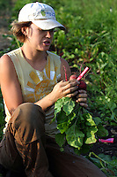 Rachel Airmet, owner of Sunshine Organics in Chelan, Washington, USA, picks radishes for the Sunshine Market and her Community Supported Agriculture clients. The farm is four acres large and the CSA has 75 paid members.