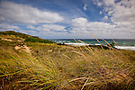 Beach Grass at White Crest Beach, Wellfleet, Cape Cod, MA, USA