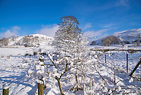 Snow and trees and hedge at Dinkling Green, Whitewell Lancashire.