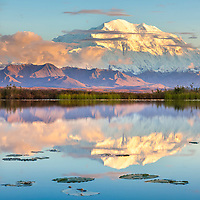 Denali reflects in a small tundra pond with lily pads, sunset in Denali National Park, Alaska.