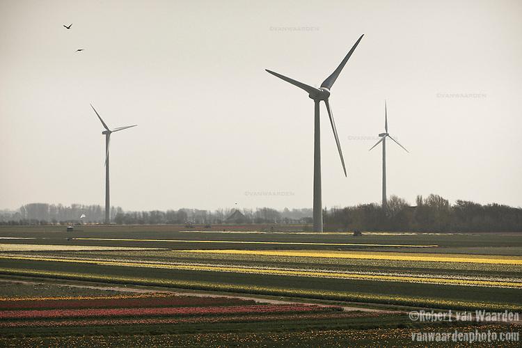 Windmills turn above the tulip fields of North Holland near Egmond aan Zee.