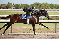 #110Fasig-Tipton Florida Sale,Under Tack Show. Palm Meadows Florida 03-23-2012 Arron Haggart/Eclipse Sportswire.