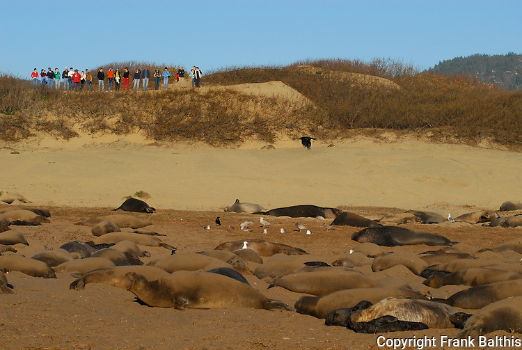 Guided walk and elephant seals at Ano Nuevo State Park
