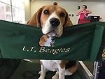 beagle FL