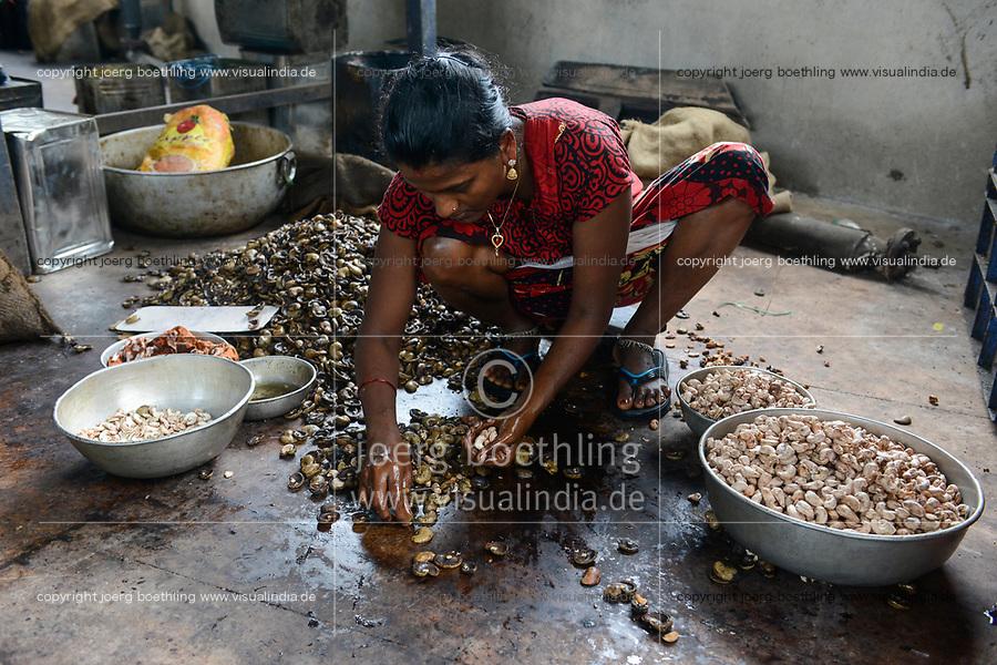 INDIA, Karnataka, Moodbidri, cashew processing factory, imported nuts from africa are processed for export, women crack and core raw nuts / INDIEN, Fabrik fuer Verarbeitung von aus Afrika importierten Kaschunuessen, Frauen knacken und schälen die rohen Nuesse