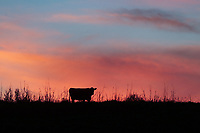 Scenes from farm country in Central Virginia. Photo/Andrew Shurtleff Photography, LLC