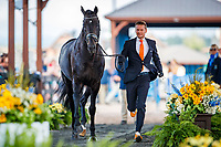 NED-Edward Gal presents Glock's Zonik NOP during the Horse Inspection for Dressage. 2018 FEI World Equestrian Games Tryon. Tuesday 11 September. Copyright Photo: Libby Law Photography