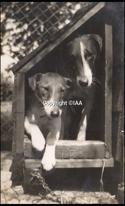BNPS.co.uk (01202 558833)<br /> Pic: IAA/BNPS<br /> <br /> Bobs in a kennel with Blyton's other fox terrier, Sandy.<br /> <br /> Enchanting photographs of children's author Enid Blyton with the pet dog that inspired many of her early works have come to light.<br /> <br /> The black and white photos depict Bobs, Blyton's fox terrier who became a celebrity in his own right after she started writing letters from him in the magazine Teacher's World in 1933.<br /> <br /> The signed letter and the picture postcards were sold by International Autograph Auctions of Nottingham for &pound;200.