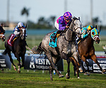 HALLANDALE BEACH, FL - JANUARY 27: Stormy Victoria with Joel Rosario take the South Beach Stakes at Gulfstream Park Turf Sprint at Gulfstream Park Race Track on January 27, 2018 in Hallandale Beach, Florida. (Photo by Alex Evers/Eclipse Sportswire/Getty Images)