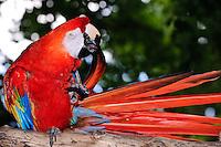 Parrots (Psittaciformes) by Peter Wochniak