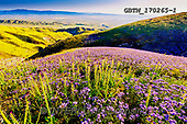 Tom Mackie, LANDSCAPES, LANDSCHAFTEN, PAISAJES, photos,+America, California, Carizzo Plain National Monument, Desert candles, North America, Tom Mackie, USA, bloom, blooming, blue,+color, colorful, colour, colourful, field, fields, hill, hills, hillside, horizontal, horizontals, landscape, landscapes, sup+er bloom, wild flower, wildflower, wildflowers, yellow,America, California, Carizzo Plain National Monument, Desert candles,+North America, Tom Mackie, USA, bloom, blooming, blue, color, colorful, colour, colourful, field, fields, hill, hills, hillsi+,GBTM170265-1,#L#, EVERYDAY