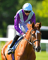"""Rock Eagle ridden by Louis Steward goes down to the start of The Willton Homes """"Confined"""" Novice Stakes (Colts & Geldings)  during Afternoon Racing at Salisbury Racecourse on 17th May 2018"""