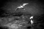 Bird Activity, Upper Newport Bay, CA