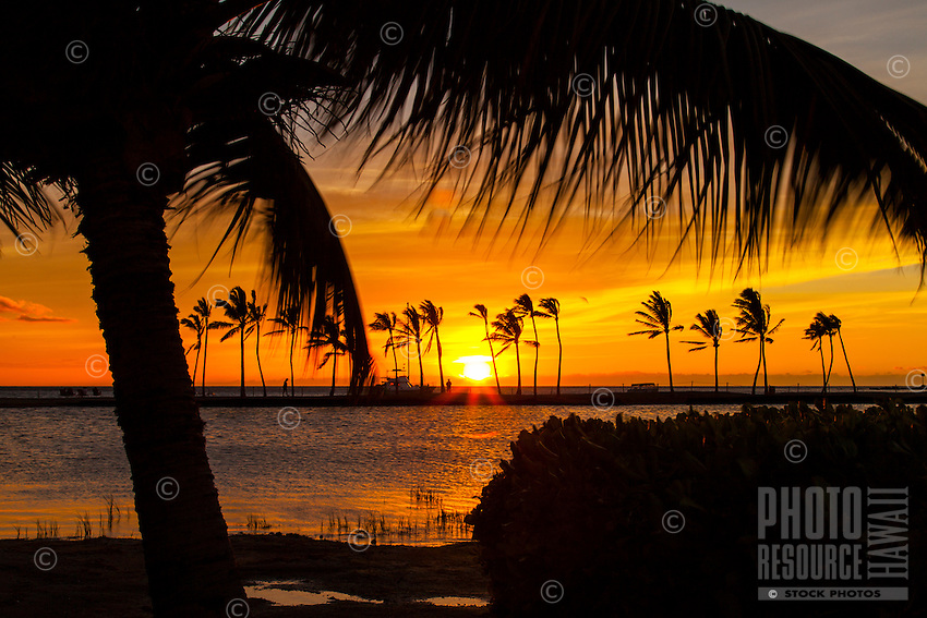 Coconut palm trees silhouetted by a vibrant orange sunset, 'Anaeho'omalu Bay, Big Island.