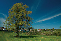 Coldstream and the River Tweed, Scottish Borders