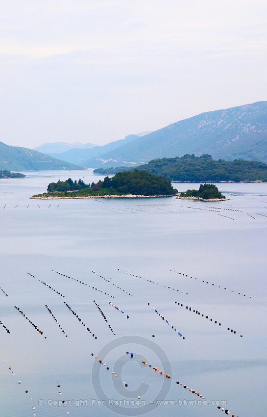 Oyster and shellfish shell fish farm beds in the Kanal Malog Stona straight by the Peljesac peninsula with mountains in the background Peljesac peninsula. Dalmatian Coast, Croatia, Europe.