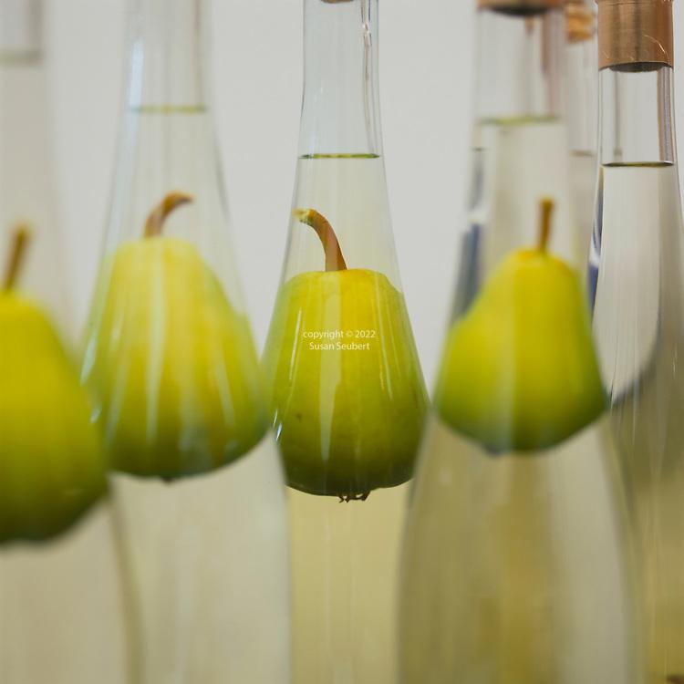 Pears grown inside of a bottle in Hood River, Oregon, which are now floating in eau de vie de poire, a small batch pear brandy by Clear Creek Distillary in Portland, Oregon