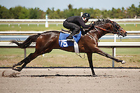 #75Fasig-Tipton Florida Sale,Under Tack Show. Palm Meadows Florida 03-23-2012 Arron Haggart/Eclipse Sportswire.