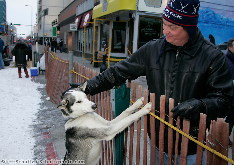 "Spectator Andy Mroczka from Baltimore, MD pets ""Duke"" on of G.B. Jones' dogs in Anchorage on Saturday March 1st during the ceremonial start day of the 2008 Iidtarod Sled Dog Race."