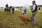 """Cattle marking and branding with the Dell""""Orto family in the Sierra Nevada Foothills of California...**usage by any anti-livestock individual, group, publication, websites, e-mail or anything similar is prohibited."""