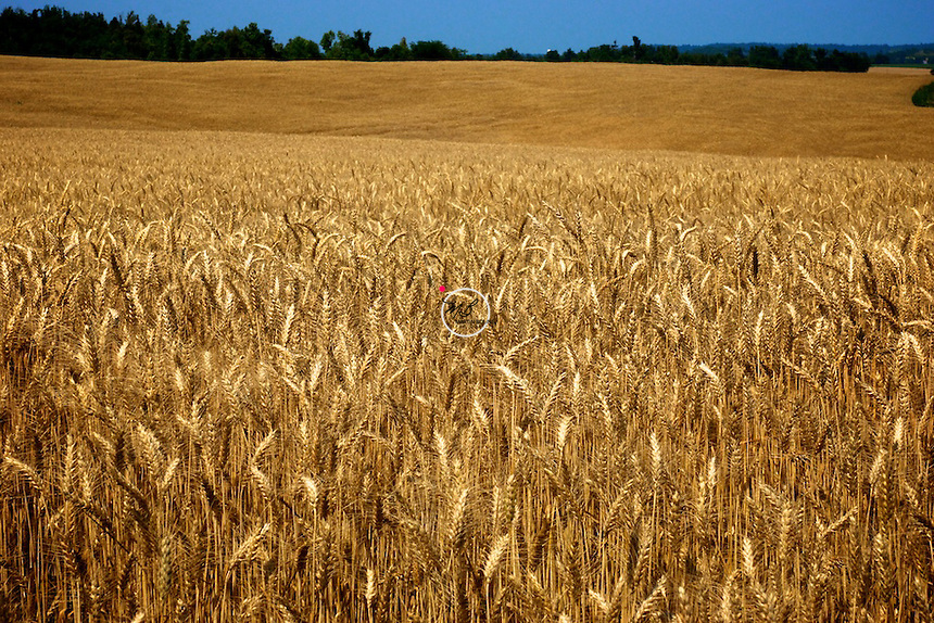 Kentucky Wheat Field