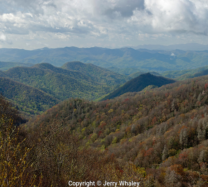 Early Spring, Great Smoky Mountains