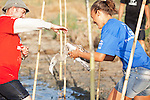 Volunteer passing juvenile Flamingo to another volunteer to release it back into the lagoon it was born in, during the annual leg ringing event at the Fuente de Piedra Laggon iin Andalucia,Spain