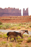 Loose from their pasture, Navajo horses wander the road side at Monument Valley Navajo Tribal Park on the Utah-Arizona border July 1, 2010. The Red Rock Canyons Tour, organized by Lizard Head Cycling Tours, wound through 400 miles of the desert southwest. The route traveled through canyons and national monuments in Colorado, Utah and Arizona, ending at Lake Powell. (Kevin Moloney for the New York Times)