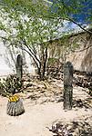 Cacti at San Xavier del Bac Mission, Tucson, Arizona