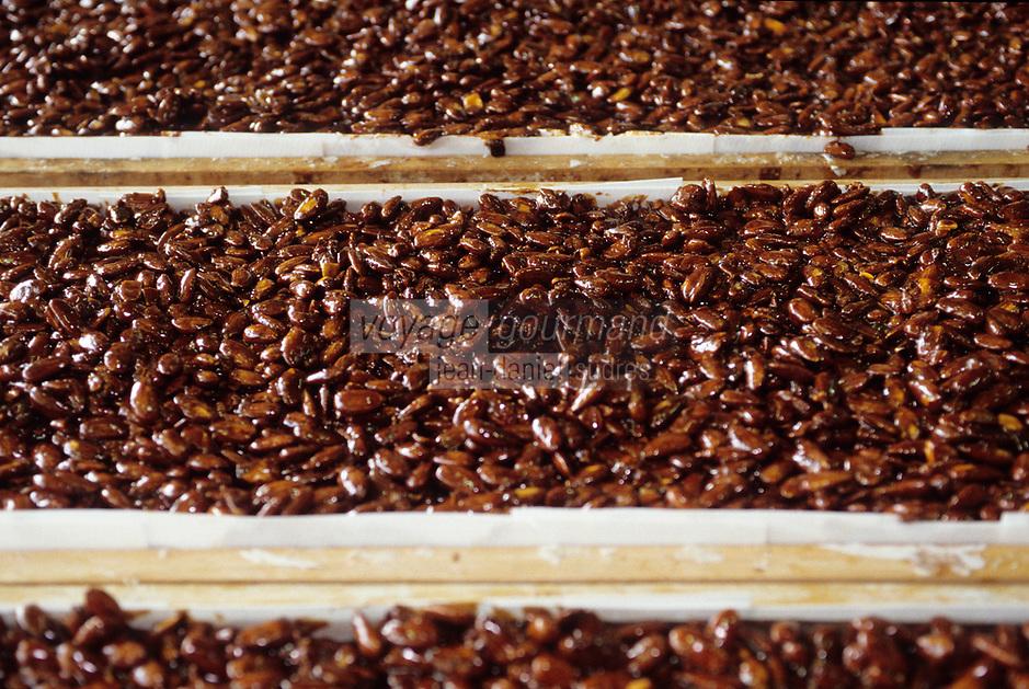 Europe/France/Provence-Alpes-Côte d'Azur/04/Alpes de Haute Provence/Peyuruis: Fabrication du nougat noir chez Manon espace Saint-Pierre