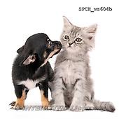 Xavier, ANIMALS, REALISTISCHE TIERE, ANIMALES REALISTICOS, FONDLESS, photos+++++,SPCHWS604B,#A#