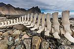 Whale skeleton, Austur-Skaftafellssýsla, Iceland