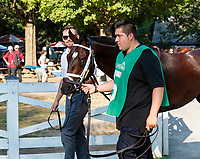 Seanow enters the paddock as Opry (no. 8) wins the With Anticipation  Stakes (Grade 3), Aug. 29, 2018 at the Saratoga Race Course, Saratoga Springs, NY.  Ridden by  Javier Castellano, and trained by Todd Pletcher, Opry finished 1 1/2 lengths in front of Somelikeithotbrown (No. 7).  (Bruce Dudek/Eclipse Sportswire)