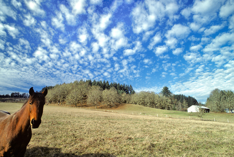 Horse in pasture with clouds. Near Alpine, Oregon.
