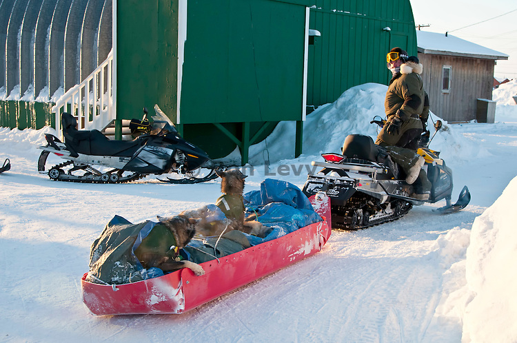Unalakleet checkpoint -- Sled dogs being taken to airport for transport back to Anchorage after musher Jake Berkowitz had to scratch due to a knife cut on his hand, Iditarod 2012