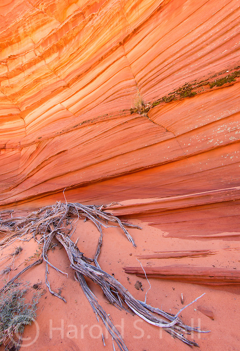 Description/Caption:<br /> Vermillion Cliffs in the Coyote Buttes area of Arizona provide many opportunities for a hikes in beautiful sandstone formations.  Paw Hole and Cottonwood are two great destinations when one fails to get one of the twenty allocated passes into the world famous Wave.